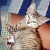 ceares: kitty in a lap (cookie)