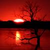 fireheart: (bloodsun)