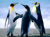 ilovebadmovies: (penguins)