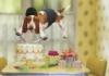 deilf: (торт)