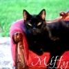 awils1: (Miffy-1)