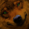 amberwolf: An red-orange wolf with green eyes. Kind of a goofy smile, too. (amber, wolf)