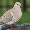 nobodytomourn: ([dove] perched on fountain)
