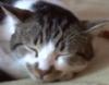 little_firestar: cetto (kitty cetto)