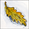 kaberett: a watercolour painting of an oak leaf floating on calm water (leaf-on-water)