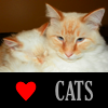 foxfirefey: The portraits of a snuggling flame point cat and flame point kitten. (love my kitties)