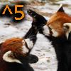 telaryn: (High Five Pandas)