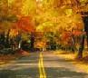 ceebeegee: (Massachusetts foliage)