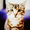 quirkyandquiet: (stock ; cute kitty)