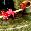 shiraume_fic: (Japanese Fountain)