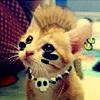 jenna_marianne: kitten with mohawk (punk kitten)