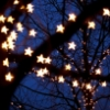 midnightlights: Star-shaped fairy lights in tree branches (roses through bars)