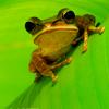 brigdh: (angry frog)