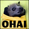 esther_asphodel: a bat wrapped in a blanket that says O Hai (adorable bat)