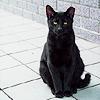 blackmagus: (♒ Jazz - eyeing)