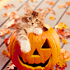isabelladangelo: (Halloween Kitten)