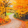 isabelladangelo: (Fall Road)