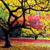 isabelladangelo: (fall color)