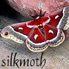 silkmoth101: (green leaves water)