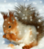 vesnyanka: (squirrel)
