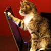 shinya_diey: (kat&laptop)
