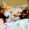possibilityleft: (sleepy)