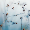 possibilityleft: (berries)