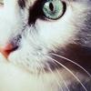 possibilityleft: (cat eye)