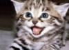 reddeathherself: (kitty!)