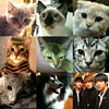 sakana17: 7 cats, one dog, and their humans (jyj-pets)