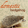 oursin: Pciture of hedgehog labelled domestic hedgehog (domestic hedgehog)