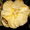 biggelois: (Tulip1)