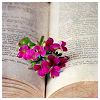 sid: (pretty Flower on book)