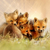 melsheartsthings: (fox kits) (Default)