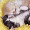 littlebabycats: (kittehs!)