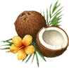 pinesandmaples: An illustration of brown coconuts. (theme: history)