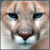 jean_darchivist: (Cougar Closeup)