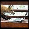 reynardine: (computer_fox)