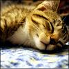 glashtyn: (Sleepy Kitten)