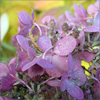ms_nerd: (pink flowers)