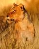 g_lioness: (watch)