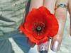 shiro_ki: (poppy)