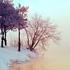 tanja80: (зима)