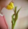 natasja: (tulip)