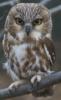 odyn_owl: (owl)