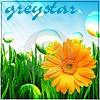 greystar_belaya: (greystar)
