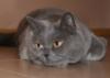 kligono: (Моя кошка)