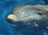 annarakhmanina: (дельфин)