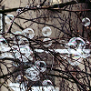 lavinia: soap bubbles in bare branches (R - character-hair)