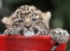 ircat: (leopard)